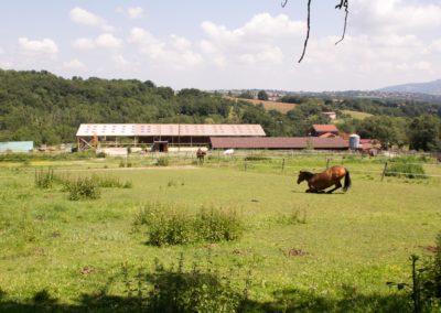 Les paddocks au dessus du barn - Les Écuries du Vallon